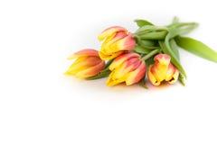Bukiet pomarańczowego koloru żółtego tulipany na białym tle, odizolowywający z kopii przestrzenią 2007 pozdrowienia karty szczęśl Zdjęcie Royalty Free