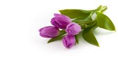 Bukiet purpurowi tulipany na białym tle, odizolowywający z kopii przestrzenią 2007 pozdrowienia karty szczęśliwych nowego roku Zdjęcia Royalty Free