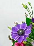 bukiet Purpurowy anemon obraz royalty free