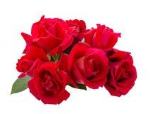 bukiet puszki kropli liści, czerwona róża wody Obraz Stock