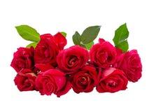 bukiet puszki kropli liści, czerwona róża wody Zdjęcie Royalty Free