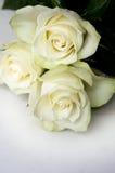 bukiet róż Obraz Royalty Free
