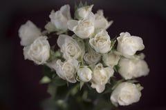 bukiet róż białe Obrazy Stock