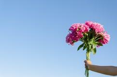 Bukiet różowe peonie w kobiety ręce na niebieskim niebie Zdjęcie Royalty Free