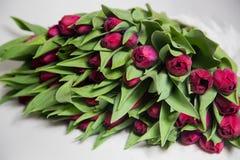 Bukiet różowi tulipany na białym tle Obraz Royalty Free