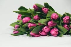 Bukiet różowi tulipany na białym tle Obrazy Royalty Free