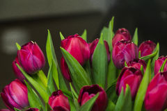 Bukiet różowi tulipany w wnętrzu Obrazy Royalty Free