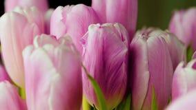 Bukiet różowi tulipany wolno krąży na swój osi zbiory