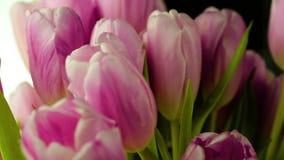 Bukiet różowi tulipany wolno krąży na swój osi zdjęcie wideo