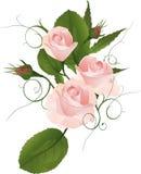Bukiet róża Fotografia Royalty Free