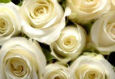 bukiet róż Obrazy Stock