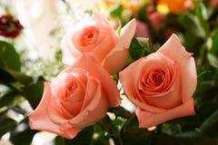 bukiet róż Zdjęcie Stock