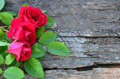 Bukiet róże na starym drewnianym krakingowym tle Obraz Stock