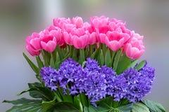 Bukiet różowi tulipany. Zdjęcia Stock