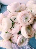Bukiet różowy ranunkulyus Zdjęcia Stock