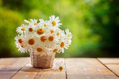 Bukiet rumianków kwiaty na drewno stole w natury zieleni backgr Fotografia Stock