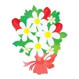 Bukiet stokrotki i tulipany Zdjęcie Royalty Free