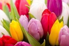 Bukiet stubarwni tulipany Obraz Stock