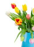 Bukiet stubarwny tulipan kwitnie w błękitnym garnku Zdjęcia Royalty Free