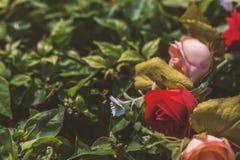 Bukiet sztuczne róże Zdjęcie Stock