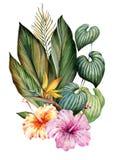 Bukiet tropikalni liście i kwiaty banki target2394_1_ kwiatonośnego rzecznego drzew akwareli cewienie ilustracji