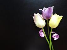 Bukiet trzy tulipanu na ciemnym tle Obrazy Stock