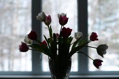 Bukiet tulipany indoors Obrazy Royalty Free