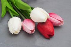Bukiet tulipany na szarość cemencie Bacground Wielkanocy lub wiosny kwiaty Powitanie wizerunek Zdjęcie Stock