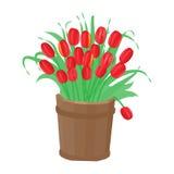 Bukiet tulipany w drewnianej balii Zdjęcie Royalty Free
