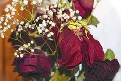 Bukiet więdnąć czerwone róże Obraz Royalty Free