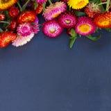 Bukiet Wiecznotrwali kwiaty Obrazy Stock