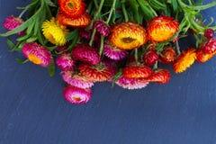 Bukiet Wiecznotrwali kwiaty Fotografia Stock