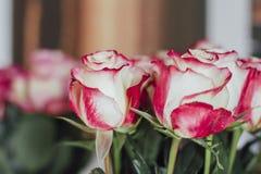 Bukiet wiele róże Bukiet wiele róże Fotografia Royalty Free