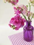 Bukiet wielka purpurowa wyka Zdjęcie Stock
