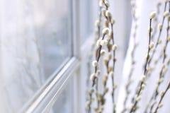 Bukiet wierzba rozgałęzia się na okno w domu wiosna kwiat Domowy coziness i wygoda Uwalnia przestrzeń dla teksta zdjęcia royalty free