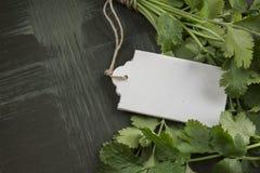 Bukiet świezi kolendery lub cilantro, metka Obraz Stock