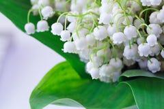 Bukiet wildflowers Zdjęcie Royalty Free