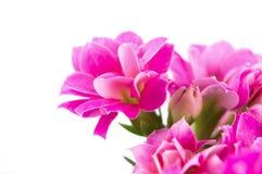 bukiet wiosna Zdjęcia Royalty Free