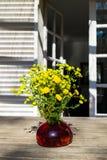 Bukiet wiosna piękny świeży śródpolny kolor żółty kwitnie tansy w czerwonej szklanej wazie na drewnianym stole w ogródzie Obraz Royalty Free