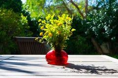 Bukiet wiosna piękny świeży śródpolny kolor żółty kwitnie tansy w czerwonej szklanej wazie na drewnianym stole w ogródzie, tanace Obraz Royalty Free