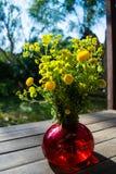 Bukiet wiosna piękny świeży śródpolny kolor żółty kwitnie tansy w czerwonej szklanej wazie na drewnianym stole w ogródzie, tanace Zdjęcie Stock