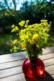 Bukiet wiosna piękny świeży śródpolny kolor żółty kwitnie tansy w czerwonej szklanej wazie na drewnianym stole w ogródzie, Obraz Royalty Free