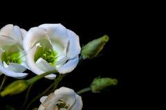 Bukiet witka kwiaty zdjęcie royalty free