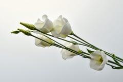 Bukiet witka kwiaty fotografia stock