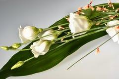 Bukiet witka kwiaty zdjęcie stock