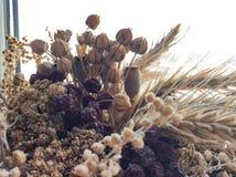 Bukiet wysuszeni kwiaty na rozmytym tle obraz stock