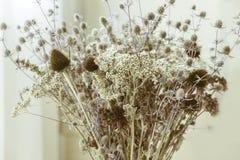 Bukiet wysuszeni wildflowers z filtrowego skutka rocznika retro stylem Zdjęcia Stock