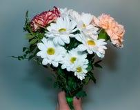 Bukiet z białej stokrotki kwiatów zamknięty gotowym na zielonym tle Zdjęcie Royalty Free