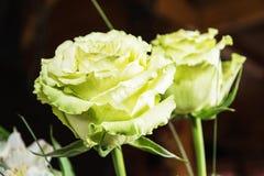 Bukiet zielone róże, zamyka w górę fotografii, urodzinowy prezent Zdjęcia Royalty Free
