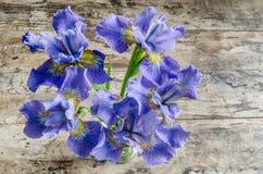 Bukieta blueflag lub irysowy kwiat na drewnianym tle Zdjęcia Royalty Free